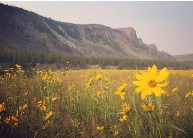 yellowstone flowers